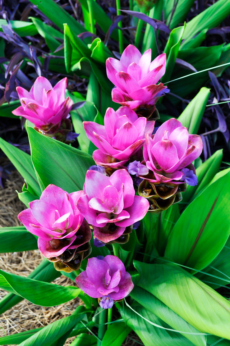 McGovern Centennial Gardens in Houston, Texas | www.cupcakesandthecosmos.com