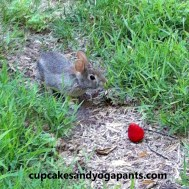 bunny in the yard with a strawberry