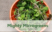 an orange bowl filled with microgreens
