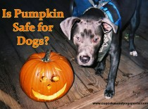Is Pumpkin Safe for Dogs?