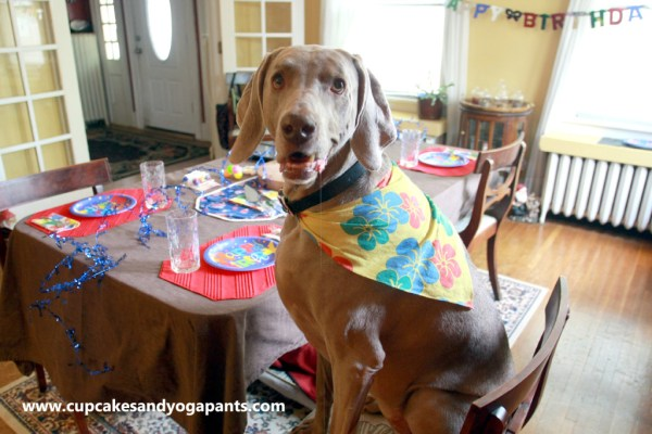 8 Random Things Parents of Weimaraners Say