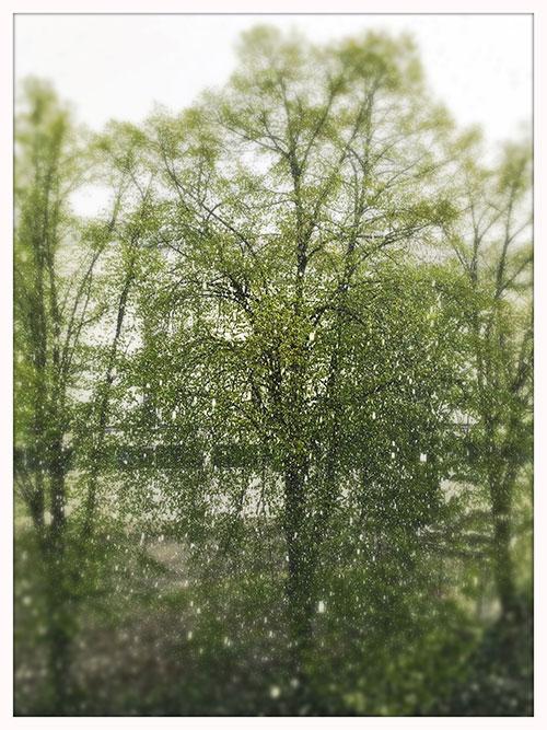 Sometimes it snows in April | Foto: Ulf Cronenberg