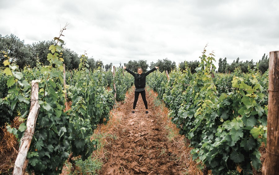 argentina mendoza wine tours lunlunta vineyards
