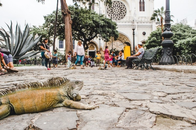 iguana park seminario guayaquil best places to visit in ecuador backpacking