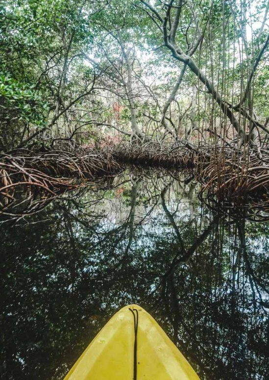 kayaking through mangroves on isla grande rosario island cartagena, colombia