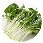 menu-item-base-radish-sprouts
