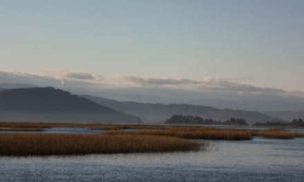 """Loteo en """"Parque La Dehesa"""": SEA pone fin anticipado a estudio de impacto ambiental en Los Ríos"""