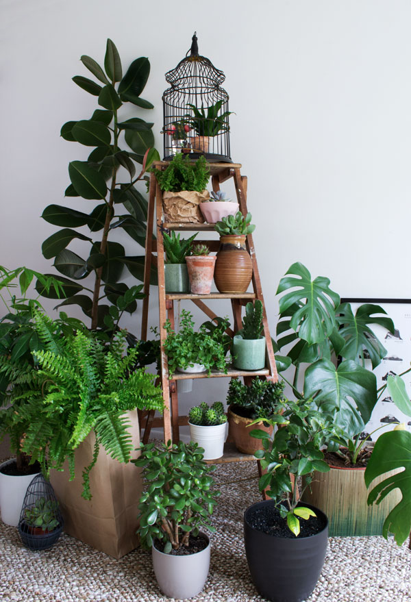 Curate & Display - Urban Jungle Bloggers - Plant Gang
