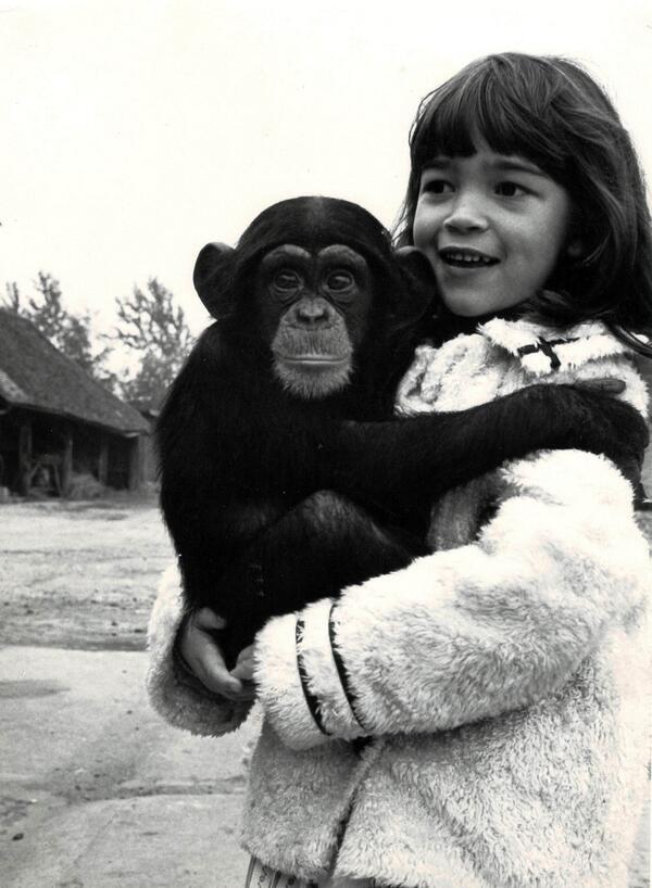 chimp-kubrick