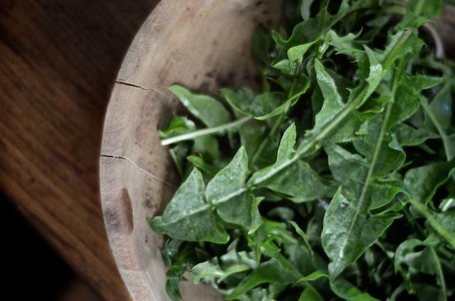 dandelion-greens-0201