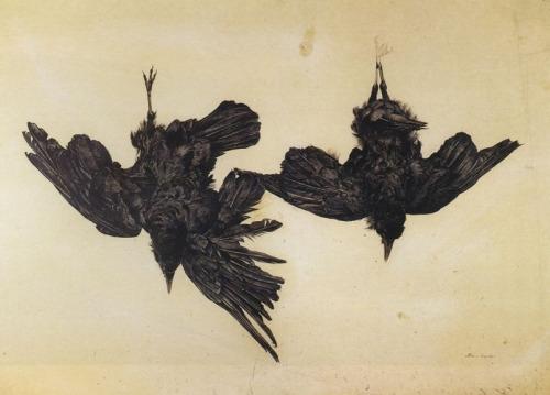 christmas-crow