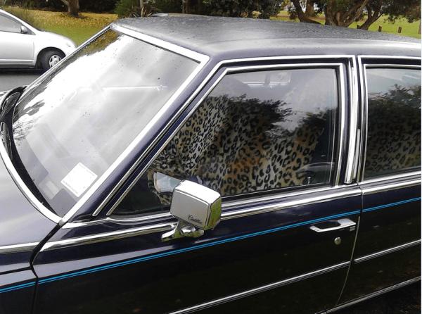 Cadillac 1981 COAL wipers