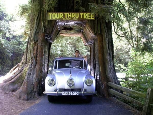 Redwood tatra