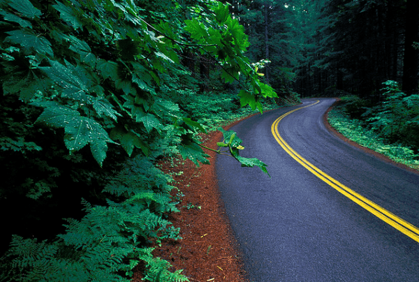 Forest-road-19