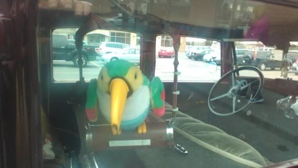 31 Model A Parrot