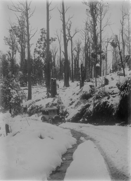 Early model car on rough road with half cleared trees in background (snow)