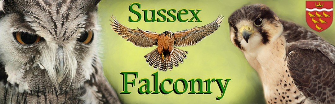 Sussex Falconry Logo