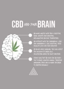 cbd-brain-1