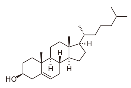 Biolit 10: metabolism