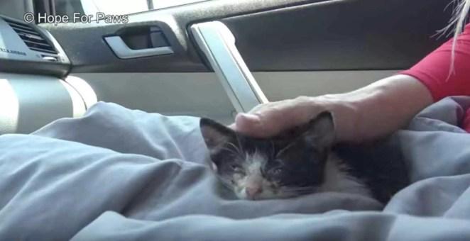 Mulher-salva-gatinho-abandonado-em-estrada