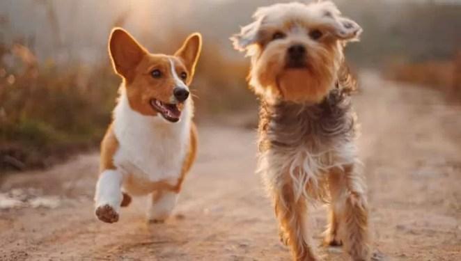 O que significa sonhar com cachorro e número da sorte