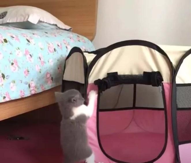 filhote tentando fugir