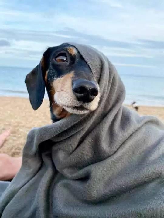 Cachorro-paralisado-se-recuperou