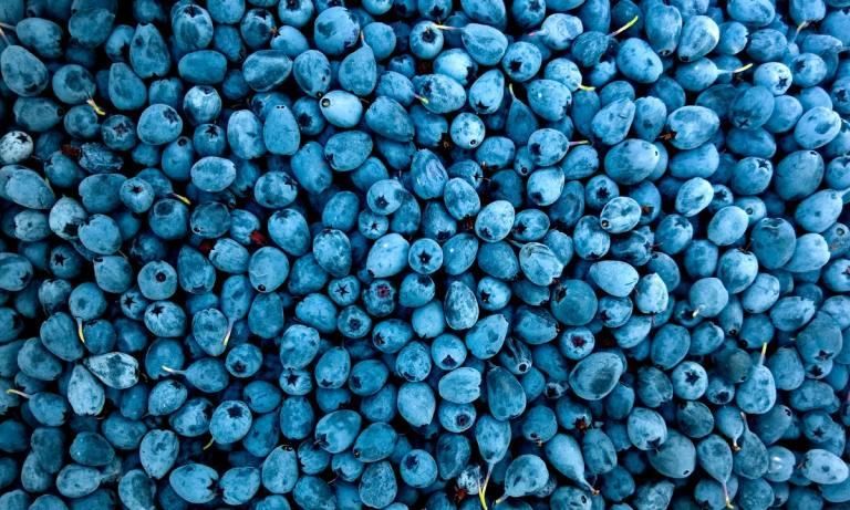 Estos son los alimentos que reducen la tensión o presión arterial