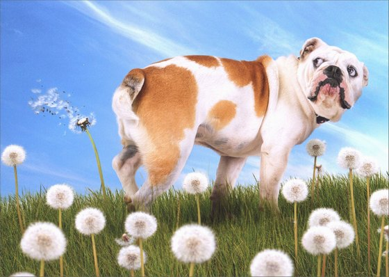 Bulldog With Dandelion 1 Card 1 Envelope Avanti Funny