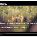 Polonia: el Gobierno propone imitar a los conejos para aumentar la natalidad