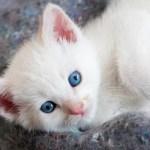 Un adolescente se gana el odio de la Red al lanzar a un gato por los aires
