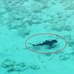 VÍDEO: Instante en que un niño se salva de ser atacado por cuatro veloces tiburones
