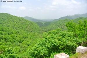 Jungle entre Udaipur et Jodhpur