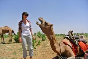 safari dromadaire Jaisalmer