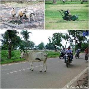 Dans les rues de Khajuraho. C'est normal en Inde