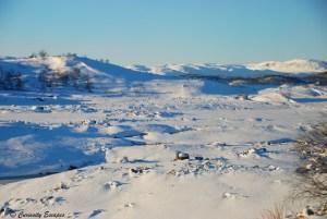 Climat polaire, plateau d'Hardangervidda, Norvège
