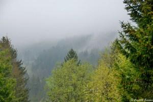 Brume sur la Forêt Noire, Allemagne