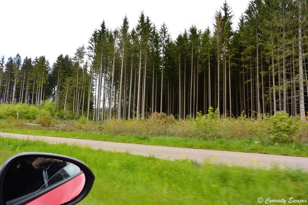 Roadtrip en for t noire allemagne curiosity escapes for Piscine foret noire