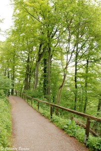 Sentier d'accès au château de Hohenzollern