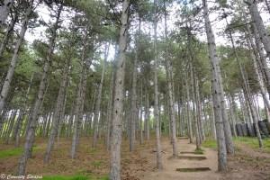 Sentier forestier à Ohrid