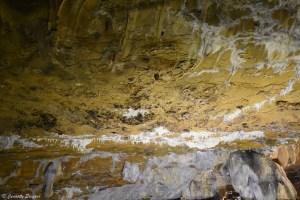 Chauve-souris aux Grottes de La Balme