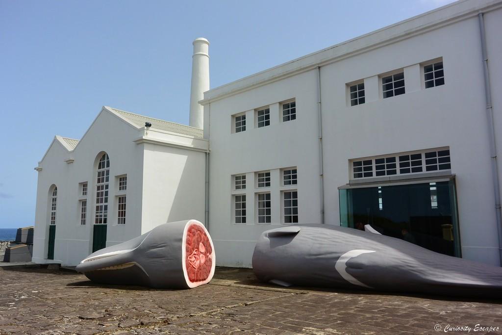 Musée des baleiniers à Flores