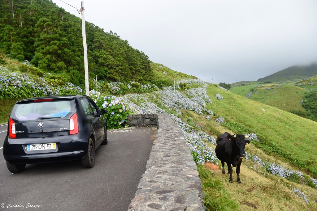 Sur les routes de Flores aux Açores