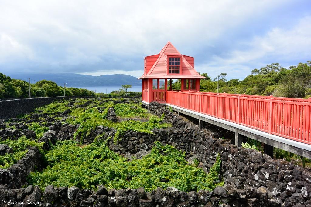 Vignes particulières de l'île de Pico, Açores