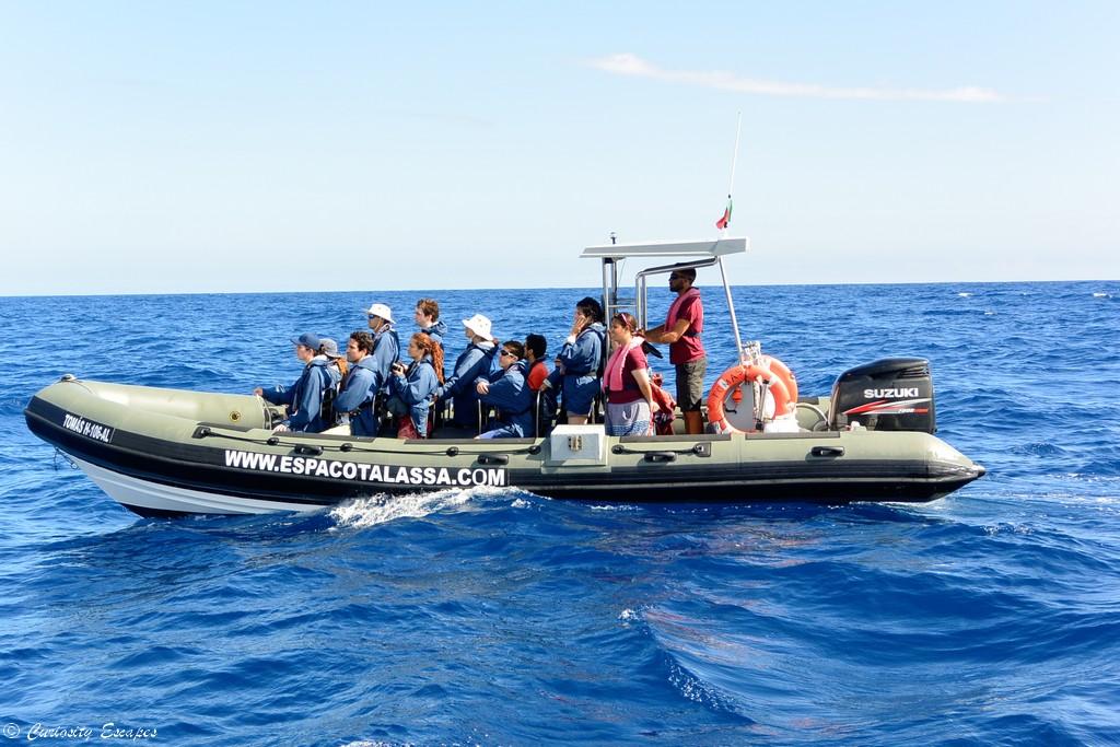 Sortie en mer avec Espaço Talassa, île de Pico