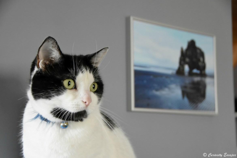 Portrait de chat en mode ouverture