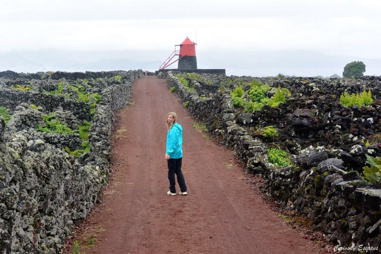 Marche dans les vignes de Pico, Açores
