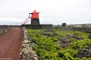 Moulin rouge de Criaçao Vehla, Pico