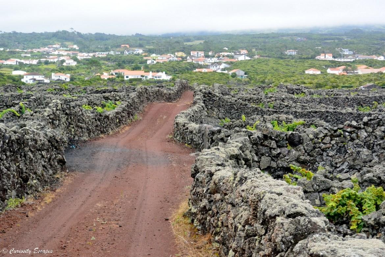 Les vignes volcaniques de l'île de Pico