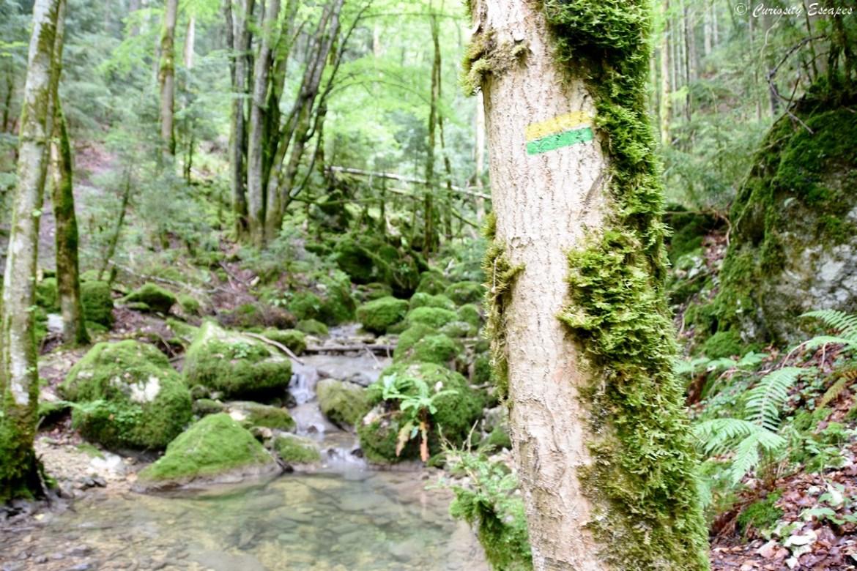Randonnée à la cascade de la Gerlette, gorges du Nan